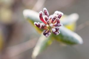 fleur-cours-photo